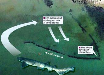 С помощью Google Earth обнаружили гигантскую ловушку для рыб