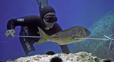 Виды подводной охоты