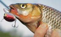 На что реагирует рыба?