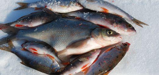 Зимняя рыбалка на чебака