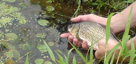 Ловим карася: способы и советы опытного рыболова