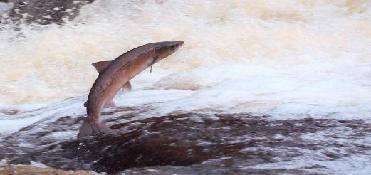 Строение и природа рыб