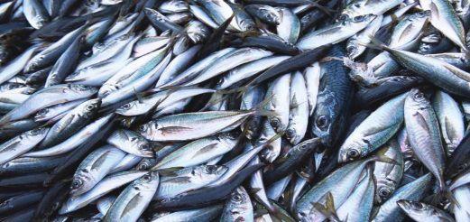 Русским рыболовам сайры придут на помощь ученые и спасатели