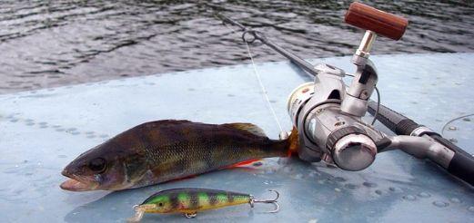 Ловля хищной рыбы по открытой воде
