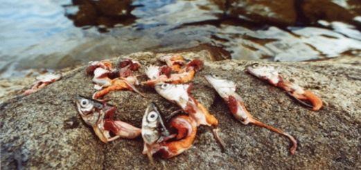 Прикормка для хищной рыбы