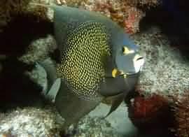 Что видит и слышит рыба?