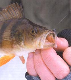 Чудо-жук, или рыбалка на Выдреце