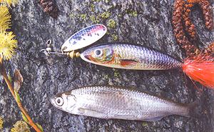 Кормовые предпочтения пресноводных рыб