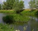 спиннингом на болоте