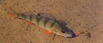 О скорости проводки Не так давно в нашей рыболовной периодике...
