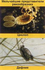 О водных растениях и рыбе
