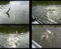 Извлечение рыбы из воды