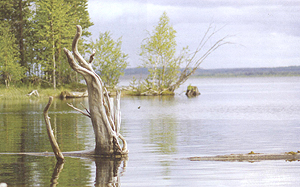 Полевые заметки об озерном хариусе