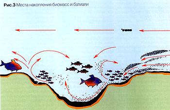 Речной лещ. Распределение рыбы. Ч. 5