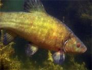 Росрыболовство предлагает ввести временный запрет на промышленный вылов рыбы на Волге