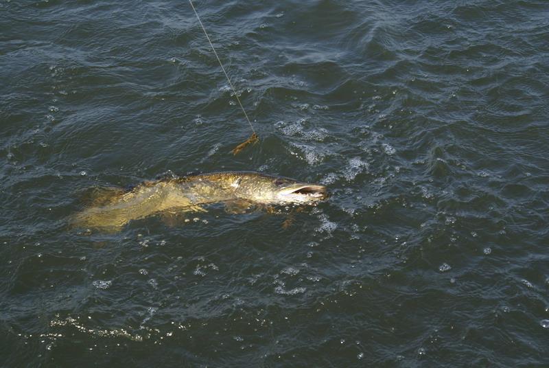 Рыбалка, подводная охота в Астрахани и на нижний Волге, а также...