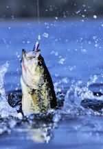 Рыболовный календарь. Январь - июнь