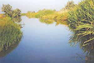 Серебряный карась в малых реках