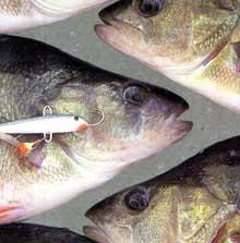 Подледная рыбалка на окуня