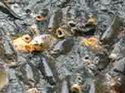 Тактика прикармливания карпа