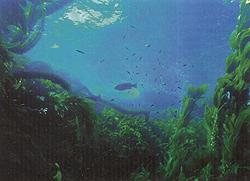 Водные растения в жизни рыб