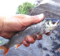 Вопросов после трех лет рыбалки возникло великое множество