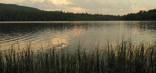 Особенности ловли в водоёмах со стоячей водой летом