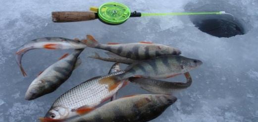 Где найти рыбу зимой? Ответим!