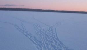 poisk-rubu-zimoi