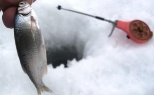 lovlja-uklejki-v-zimnij